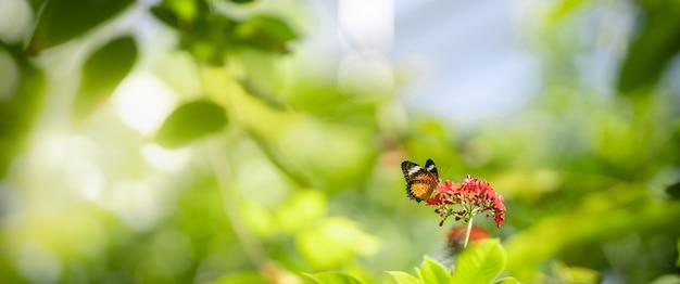 Zamyka W Górę Natura Widoku Pomarańczowy Motyl Na Zamazanym Tle W Ogródzie Z Kopii Przestrzenią Używać Jako Tło Insekt, Naturalny Krajobraz, Ekologia, świeży Okładkowej Strony Pojęcie. Premium Zdjęcia