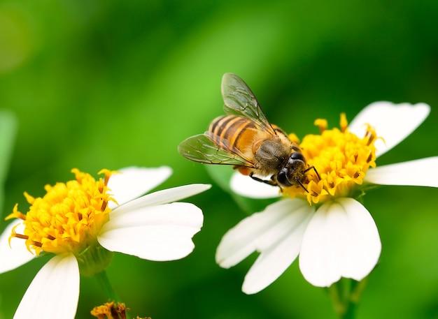 Zamyka W Górę Pszczół Na Kwiacie Premium Zdjęcia