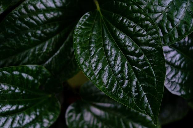 Zamyka w górę szczegółu zielony drzewny liść w dżungli Premium Zdjęcia