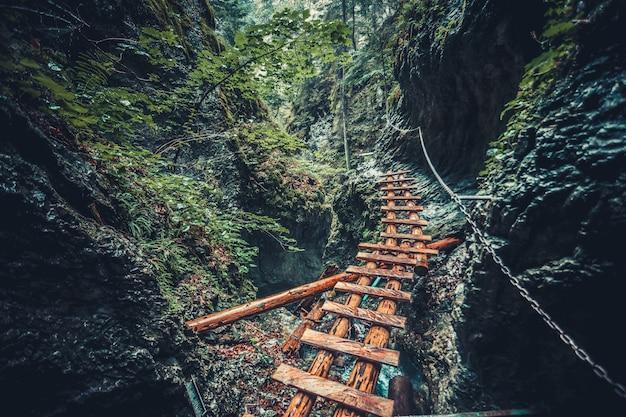 Zaniechany stary drewniany most w dżungla lesie. Premium Zdjęcia