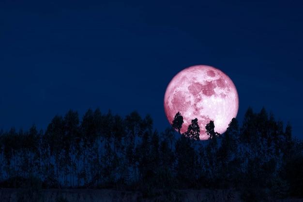 Zbiera różowy księżyc na nocnym niebie z powrotem nad sylwetką sosen Premium Zdjęcia