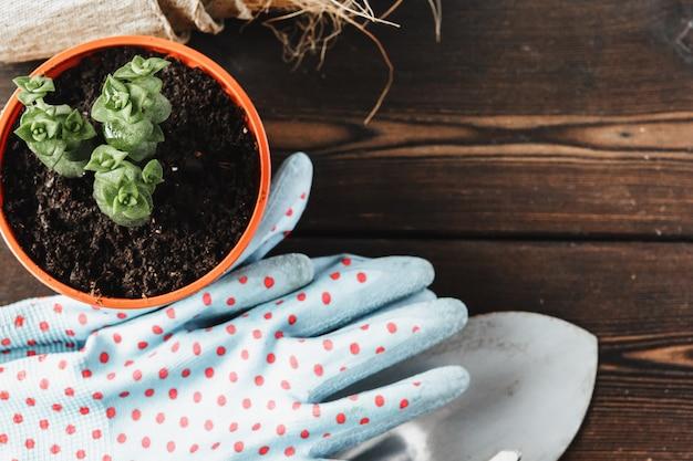Zbiór Różnych Roślin Domowych, Rękawice Ogrodnicze, Doniczki Gleby I Kielnia Na Białym Tle Drewnianych Premium Zdjęcia