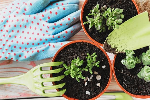 Zbiór Różnych Roślin Domowych, Rękawiczek Ogrodniczych, Ziemi Doniczkowej I Pacy. Doniczki Do Roślin Domowych Premium Zdjęcia