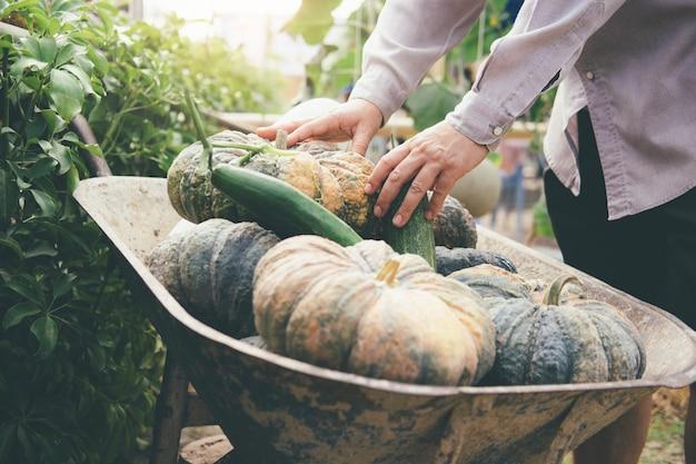 Zbiór Warzyw Z Ogrodu. Premium Zdjęcia