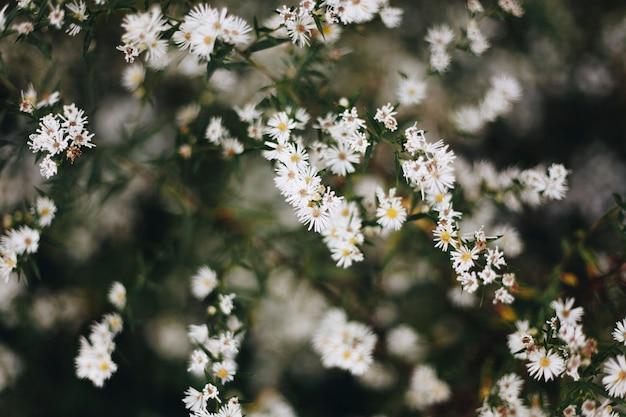 Zbliżenie biały krajacza kwiat Darmowe Zdjęcia