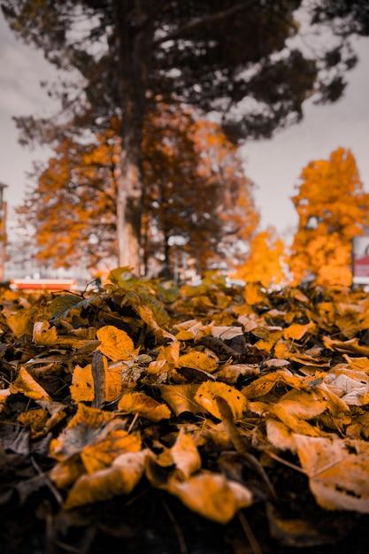 Zbliżenia Vertical Strzał żółci Liście Spadać Na Ziemi Z Zamazanymi Drzewami W Tle Darmowe Zdjęcia