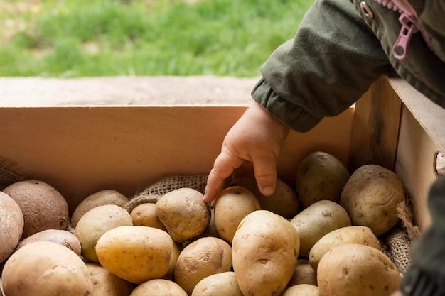 Zbliżenie Dłoni Dziecka Dotykając Ziemniaka Darmowe Zdjęcia
