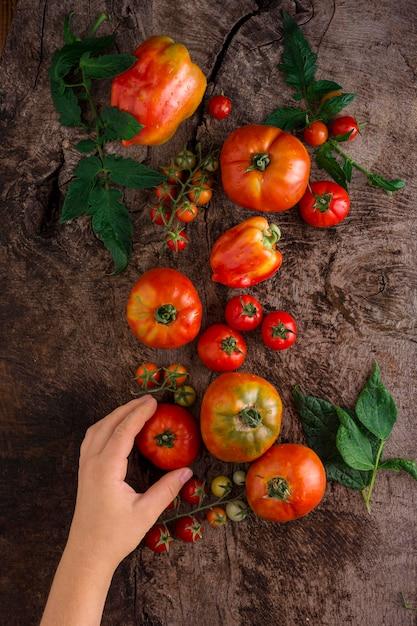 Zbliżenie Dłoni Trzymającej świeżego Pomidora Darmowe Zdjęcia