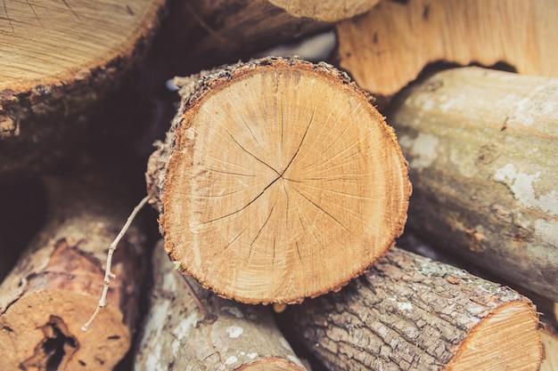 Zbliżenie Drewna Opałowego Zebrane Na Zimę. Premium Zdjęcia