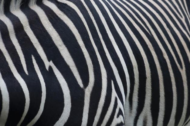 Zbliżenie Futra Zebry Darmowe Zdjęcia