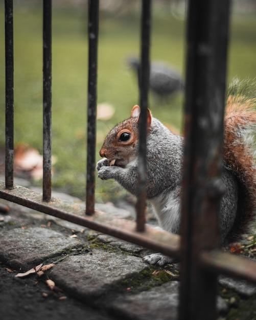 Zbliżenie: Jedzenie Wiewiórki Darmowe Zdjęcia