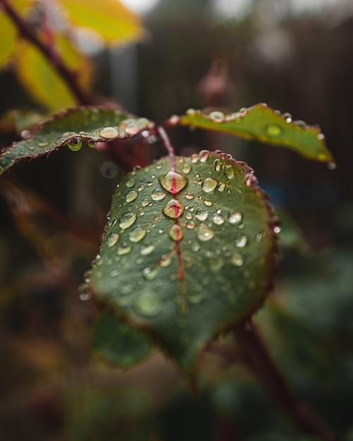 Zbliżenie Kropli Wody Na Liściach Rośliny Darmowe Zdjęcia