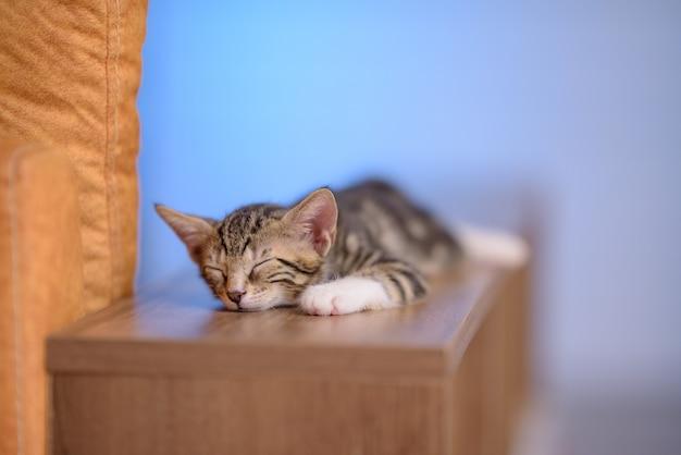 Zbliżenie ładny Kotek Domowy śpi Na Drewnianej Półce Z Rozmytym Tłem Darmowe Zdjęcia