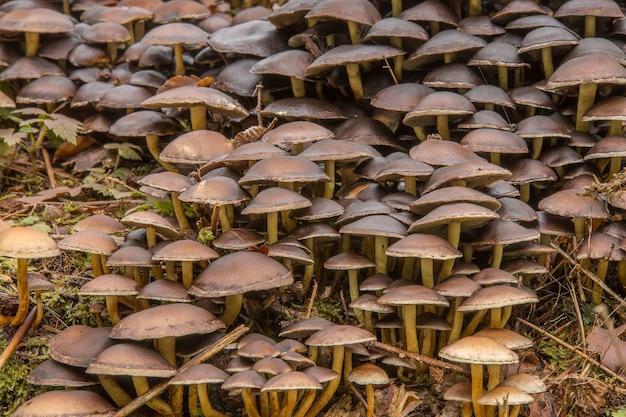 Zbliżenie Małych Grzybów Na Ziemi W Lesie Darmowe Zdjęcia