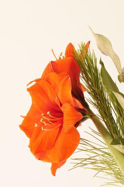 Zbliżenie Na Pomarańczowy Amarylis Otoczony Zielenią Pod światłami Darmowe Zdjęcia