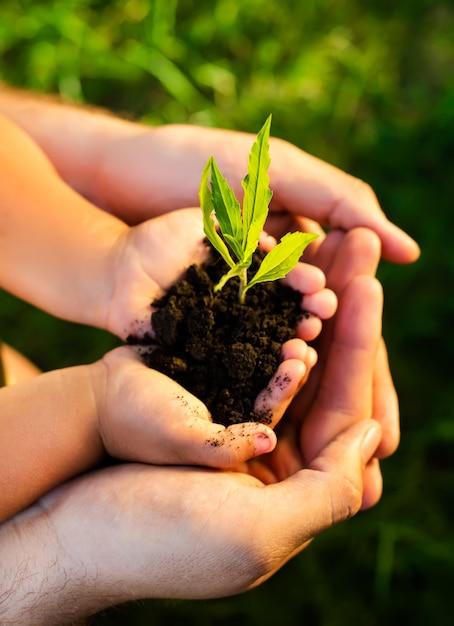 Zbliżenie Na Ręce Dzieci Trzymając Młodych Roślin Premium Zdjęcia