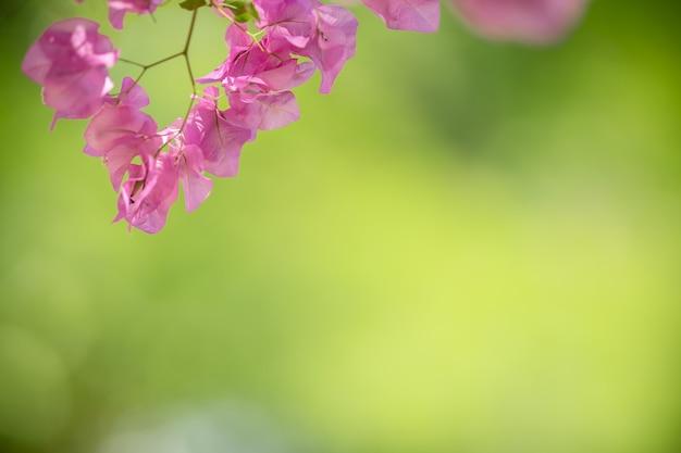 Zbliżenie Natury Widok Różowy Bougainvillea Na Niewyraźne Tło Zieleni Pod światło Słoneczne Z Bokeh I Kopiować Miejsca Za Pomocą Jako Tło Krajobraz Roślin Naturalnych Premium Zdjęcia