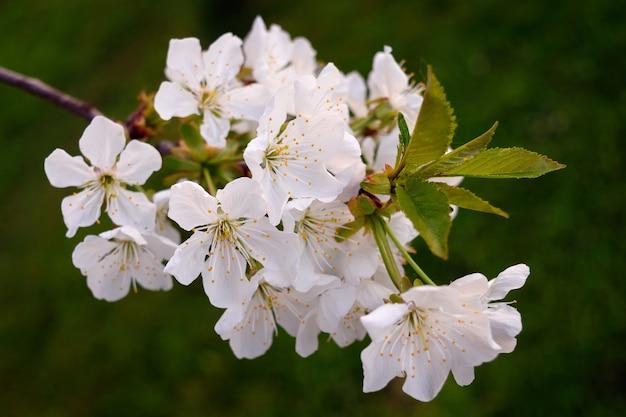 Zbliżenie Piękne Białe Kwiaty Darmowe Zdjęcia