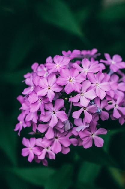 Zbliżenie Piękny Lily Kwiat Darmowe Zdjęcia