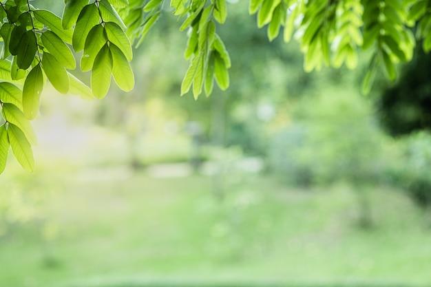 Zbliżenie Piękny Widok Natury Zieleń Opuszcza Na Zamazanego Zieleni Drzewnym Tle Z światło Słoneczne Ogródu Parkiem Publicznie. Premium Zdjęcia