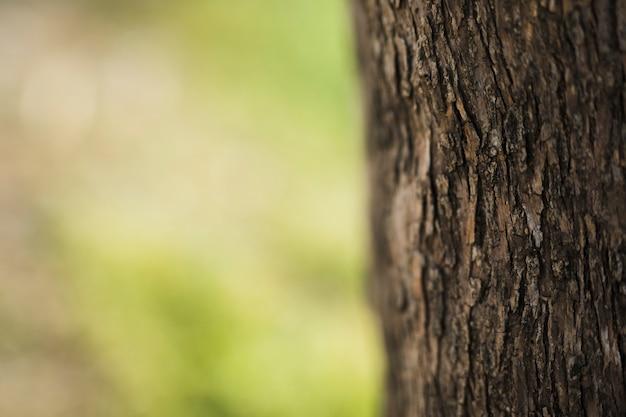 Zbliżenie pnia drzewa w tło zamazane pole Darmowe Zdjęcia