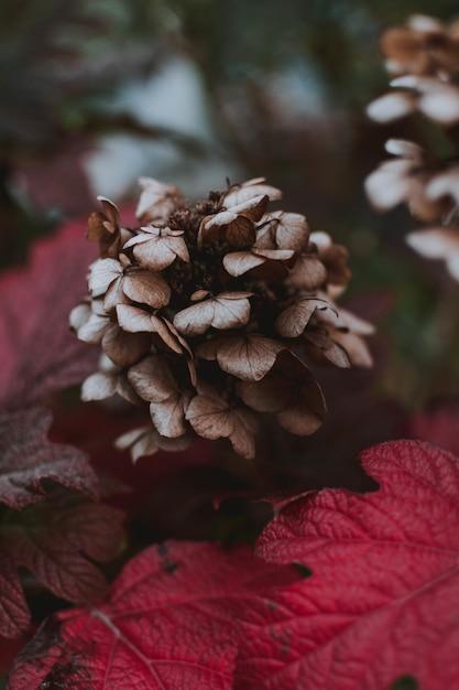 Zbliżenie Purpurowy Kwiat Grifola Frondosa Otoczony Fioletowymi Liśćmi W Lesie Darmowe Zdjęcia