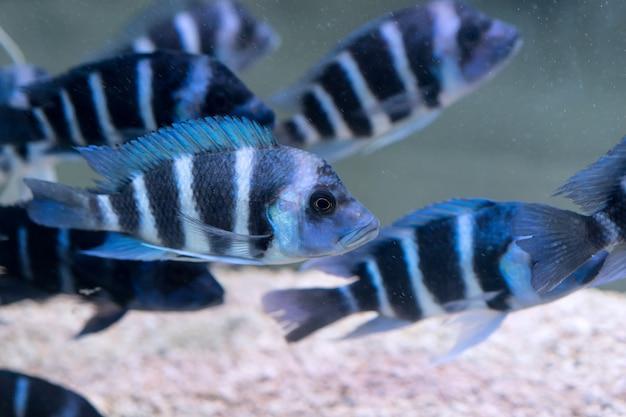 Zbliżenie Rozłożony Ryby Darmowe Zdjęcia