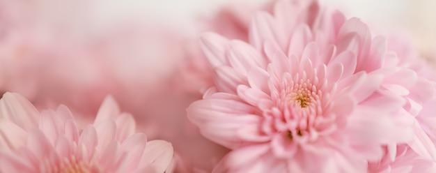 Zbliżenie Różowy Kwiat Z Białym Tłem. Premium Zdjęcia