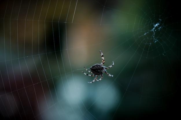 Zbliżenie Selektywne Focus Strzał Czarnego Pająka Chodzenia Po Sieci Web Darmowe Zdjęcia