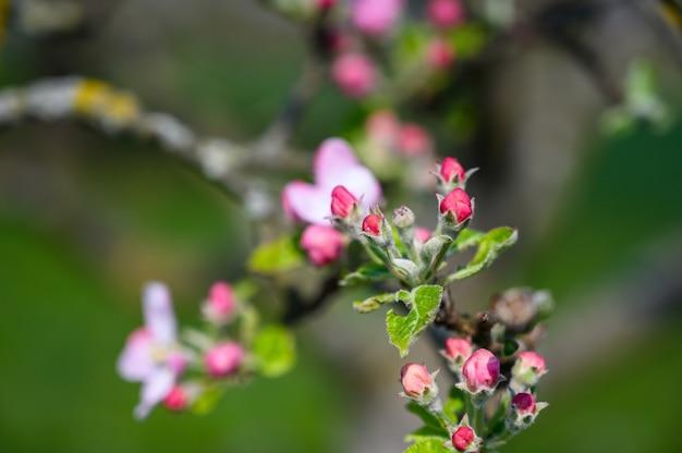 Zbliżenie Selektywne Focus Strzał Niesamowity Kwiat Pod światło Słoneczne Darmowe Zdjęcia