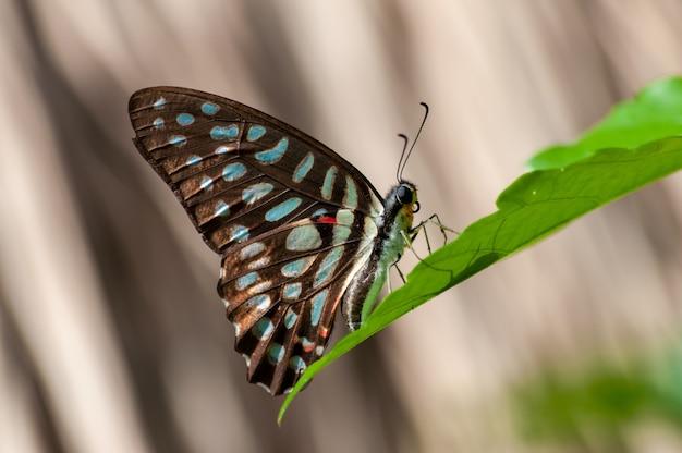 Zbliżenie Strzał Footed Motyl Na Zielonej Roślinie Darmowe Zdjęcia