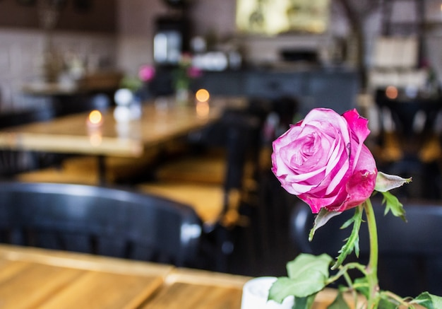 Zbliżenie Strzał Menchii Róża Z Zamazanymi Stołami Darmowe Zdjęcia