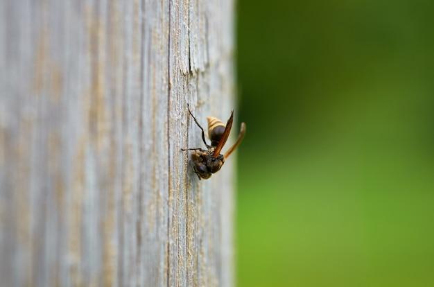 Zbliżenie Strzał Pszczoła Na Drewnianej Powierzchni Z Zamazanym Tłem Darmowe Zdjęcia