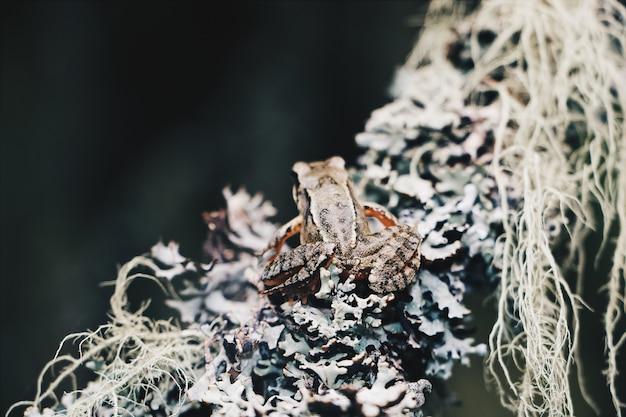 Zbliżenie Strzelał Mały żaby Obsiadanie Na Gałąź Darmowe Zdjęcia
