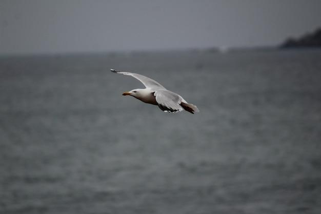 Zbliżenie Strzelał Seagull Latająca Depresja Nad Poziomem Morza Darmowe Zdjęcia