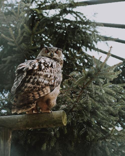 Zbliżenie Strzelał Sowy Obsiadanie Na Drewnianej Desce Blisko Zieleni Darmowe Zdjęcia