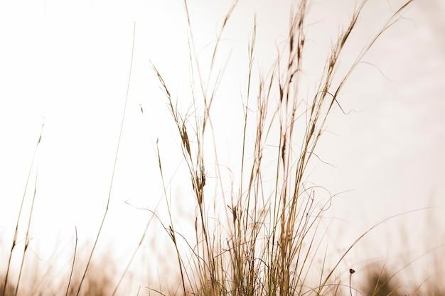 Zbliżenie Trawy Darmowe Zdjęcia
