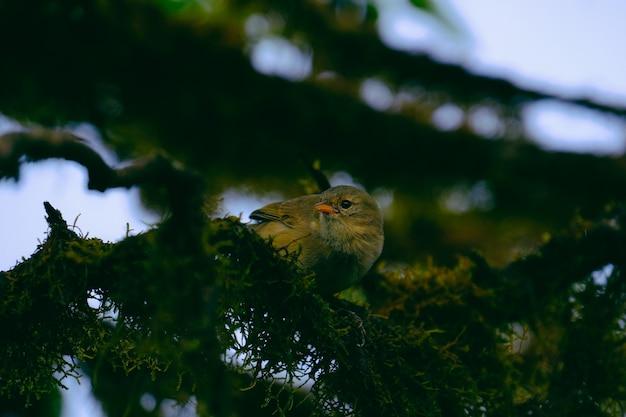 Zbliżenie Unikalny Strzał Ptak Umieszczający Na Zielonej Gałąź Darmowe Zdjęcia
