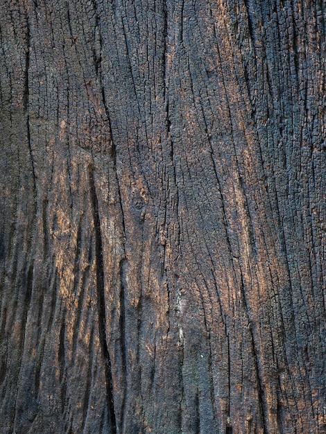Zbliżenie Wysuszona Tekstura Ciemnobrązowa Barkentyna. Premium Zdjęcia