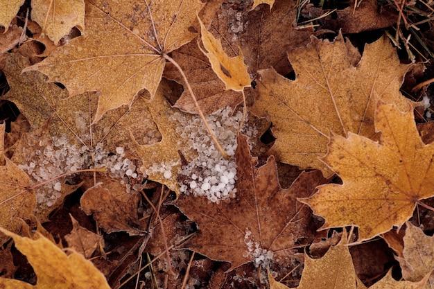 Zbliżenie Zamarzniętych Kropli Rosy Na żółtych Liściach Darmowe Zdjęcia