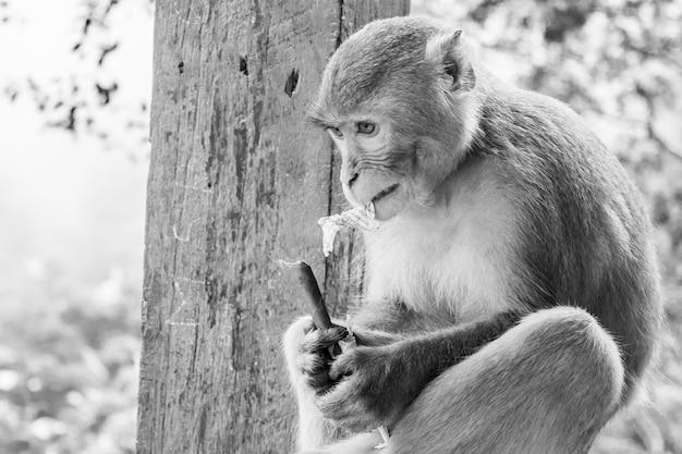 Zbliżenie Zdjęcie W Skali Szarości Rezusa Prymasa Makaka Małpy Obsiadanie Na Metalu Poręczu Darmowe Zdjęcia