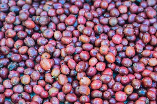 Zbliżenie ziaren kawy czerwone jagody Premium Zdjęcia