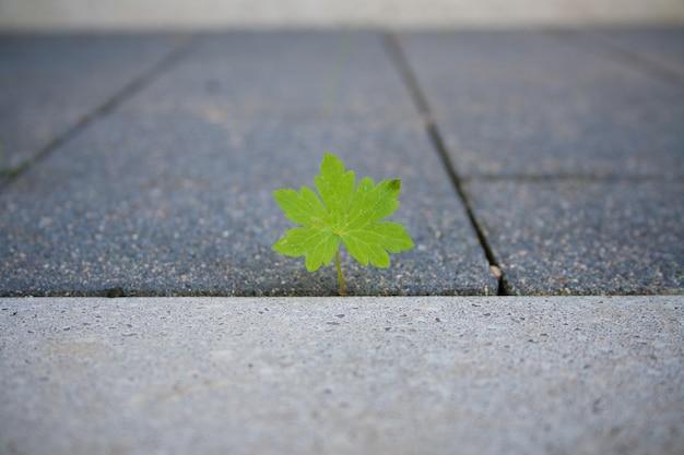 Zbliżenie Zielony Liść Na Chodniku Darmowe Zdjęcia