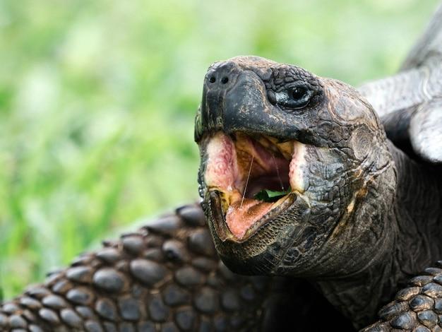 Zbliżenie żółwia Galapagos Darmowe Zdjęcia