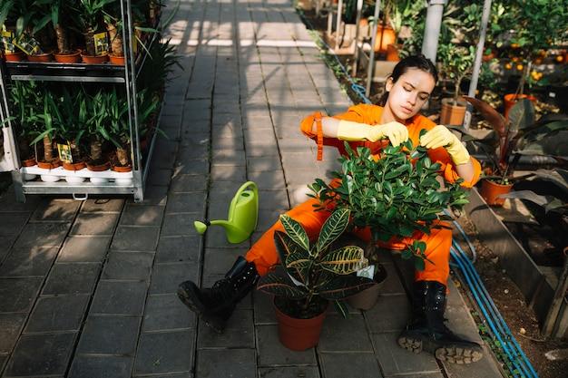 Żeńska Ogrodniczka Sprawdza Liście Doniczkowa Roślina Darmowe Zdjęcia