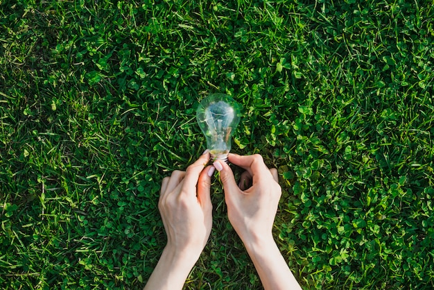 Żeńska Ręki Mienia żarówka Nad Zieloną Trawą Premium Zdjęcia