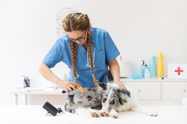 Żeński weterynarz przygotowywa psa włosy Darmowe Zdjęcia