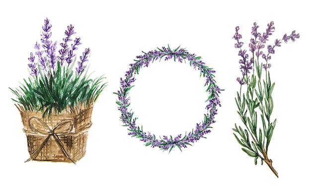 Zestaw Akwareli Lawendy. Delikatne Kwiaty Lawendy Premium Zdjęcia
