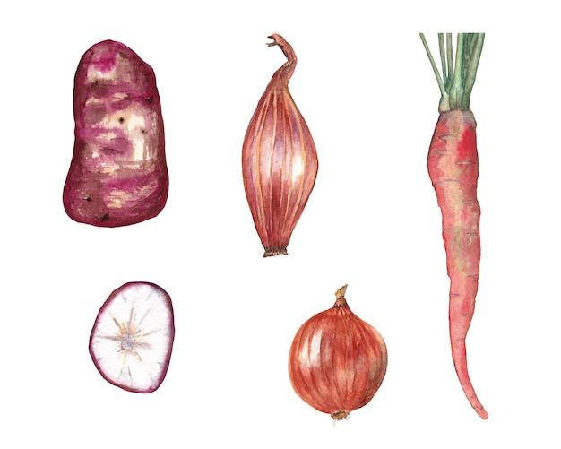 Zestaw czerwonych warzyw. marchewka, ziemniak i plasterek, cebula, szalotka. akwarela ilustracja Premium Zdjęcia