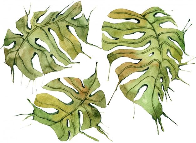 Zestaw Tropikalny Liści. Akwarele Botaniczne Ilustracje W Dżungli, Elementy Kwiatowe, Liście Palmowe I Inne. Premium Zdjęcia